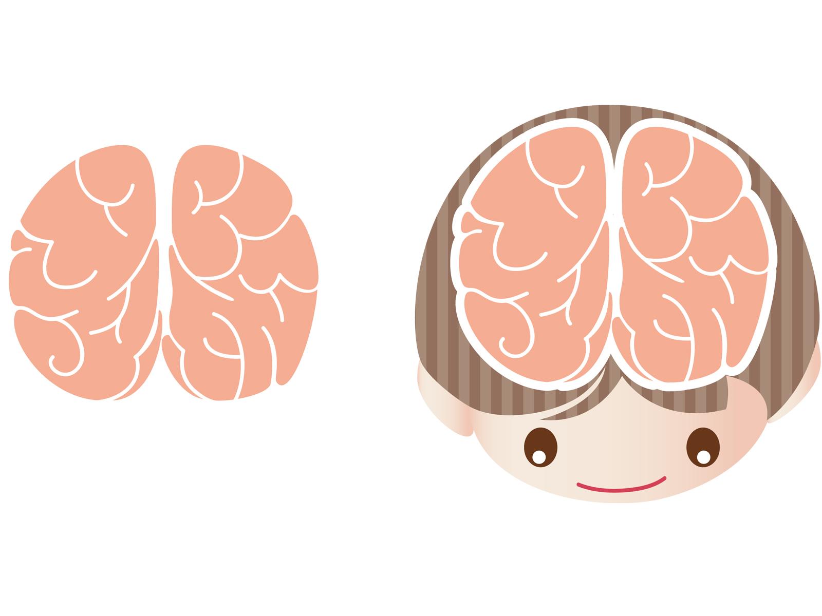 子供の脳の発育スピード